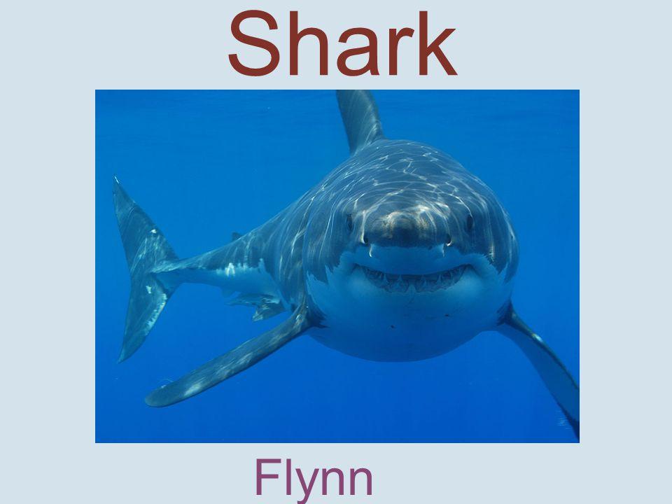 Shark Flynn