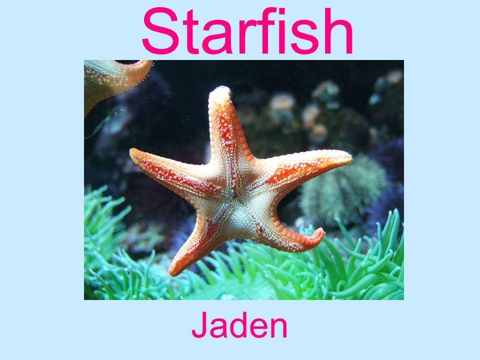 Starfish Jaden