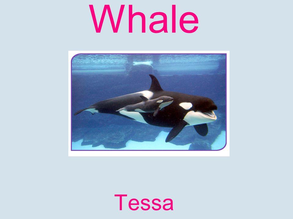 Whale Tessa