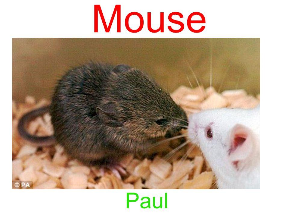 Mouse Paul