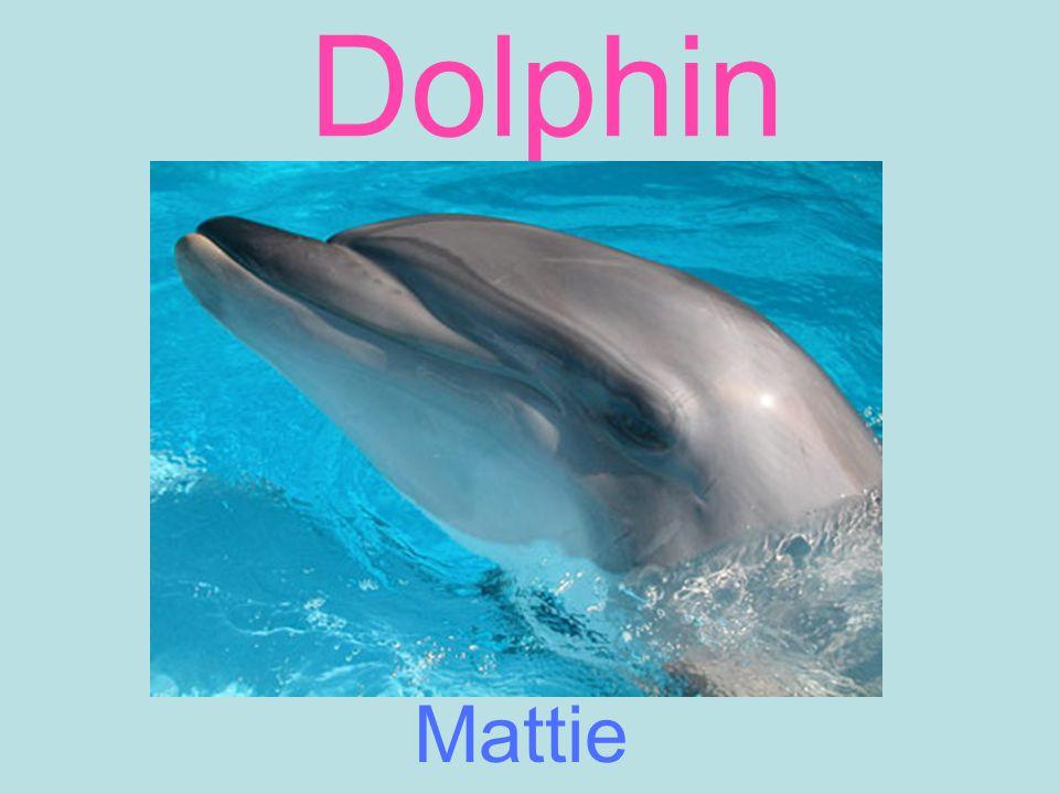 Dolphin Mattie