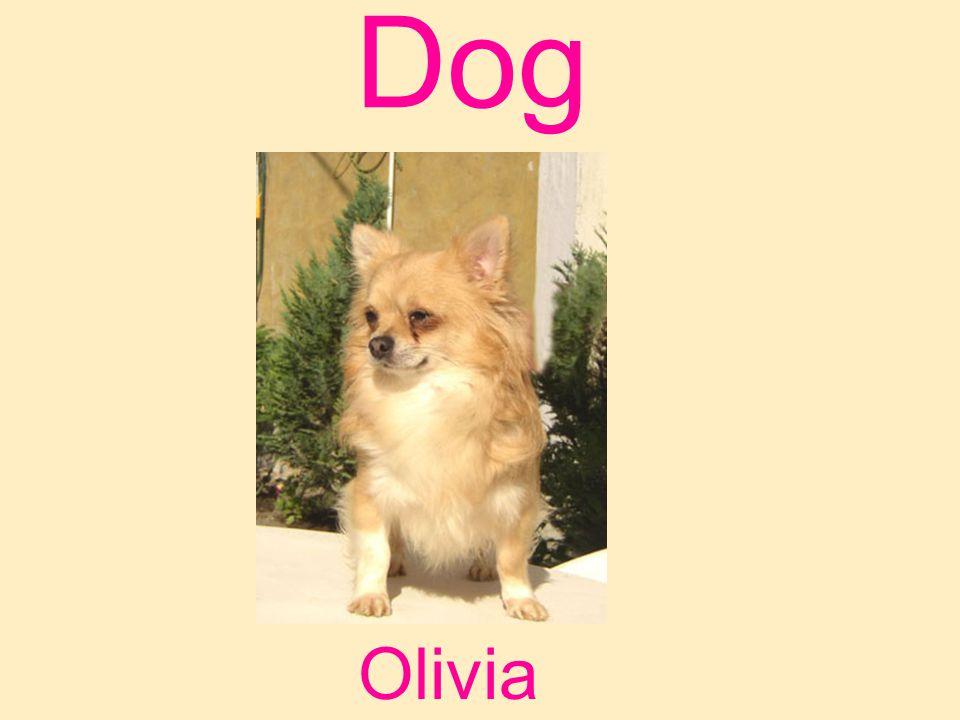 Dog Olivia