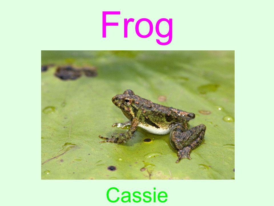Frog Cassie