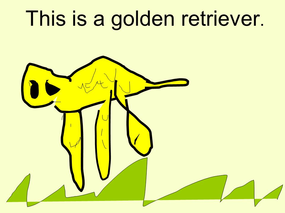 This is a golden retriever.