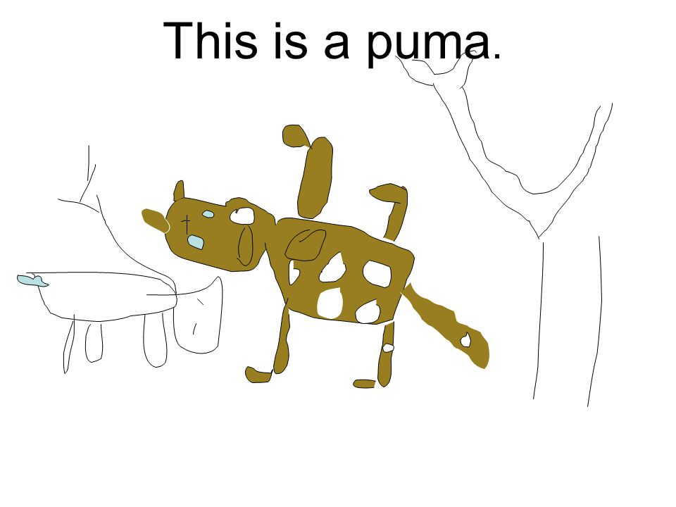 This is a puma.