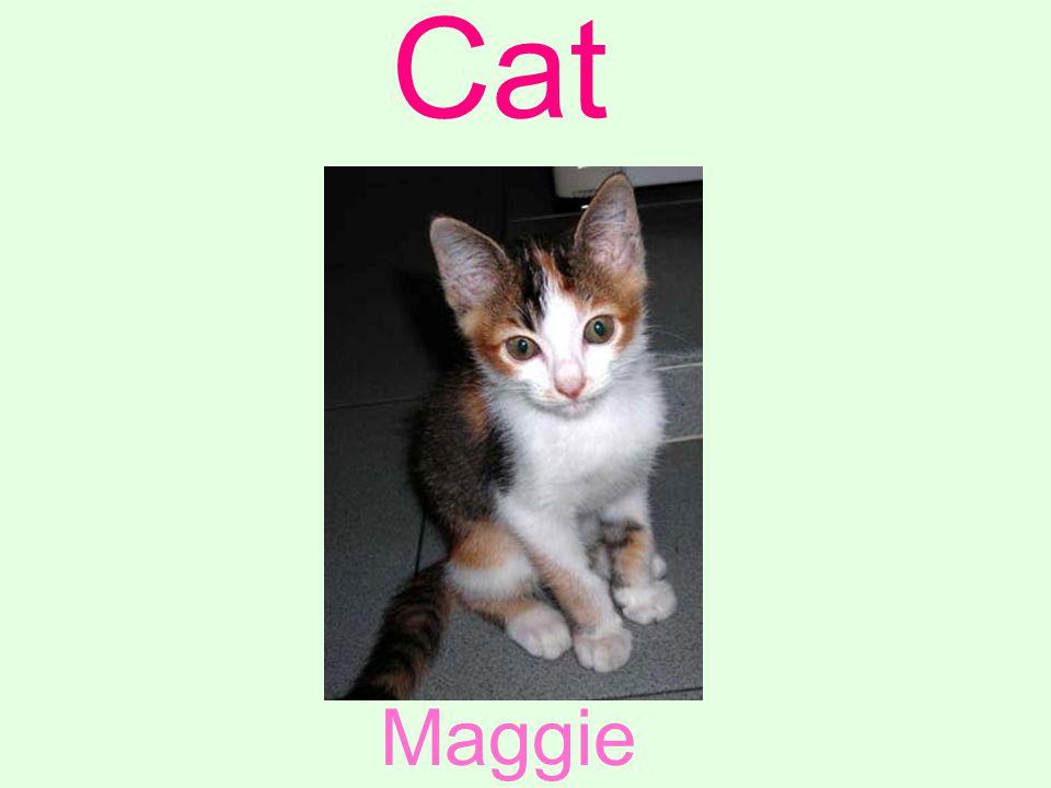 Cat Maggie