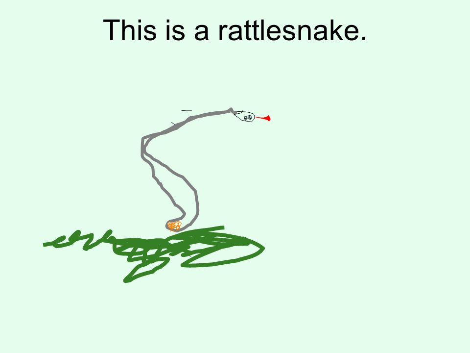 This is a rattlesnake.