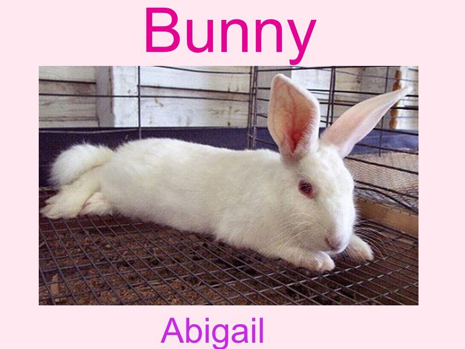 Bunny Abigail