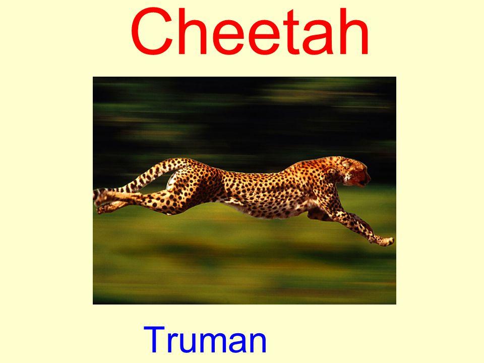Cheetah Truman