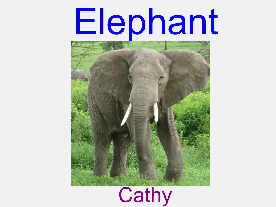 Elephant Cathy