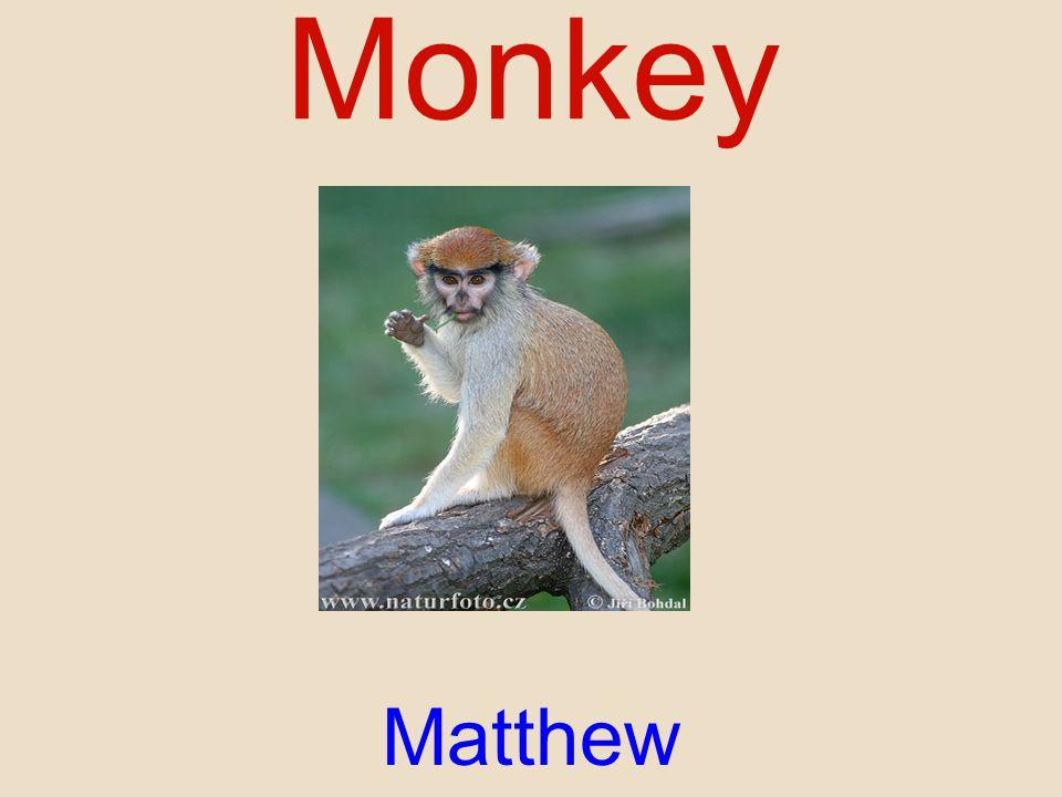 Monkey Matthew