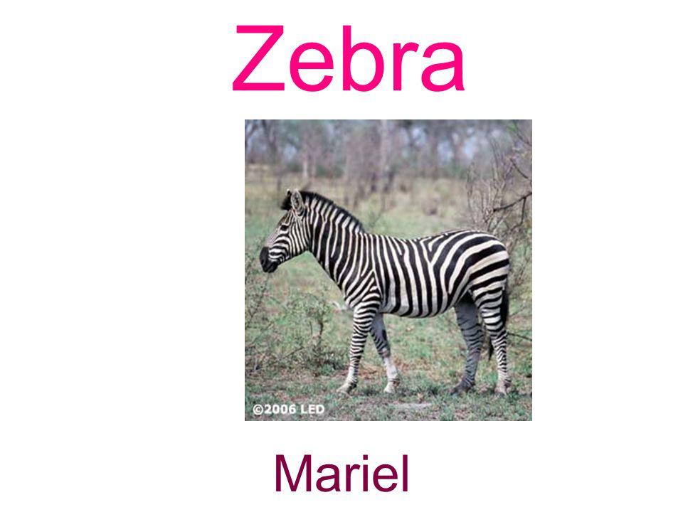 Zebra Mariel