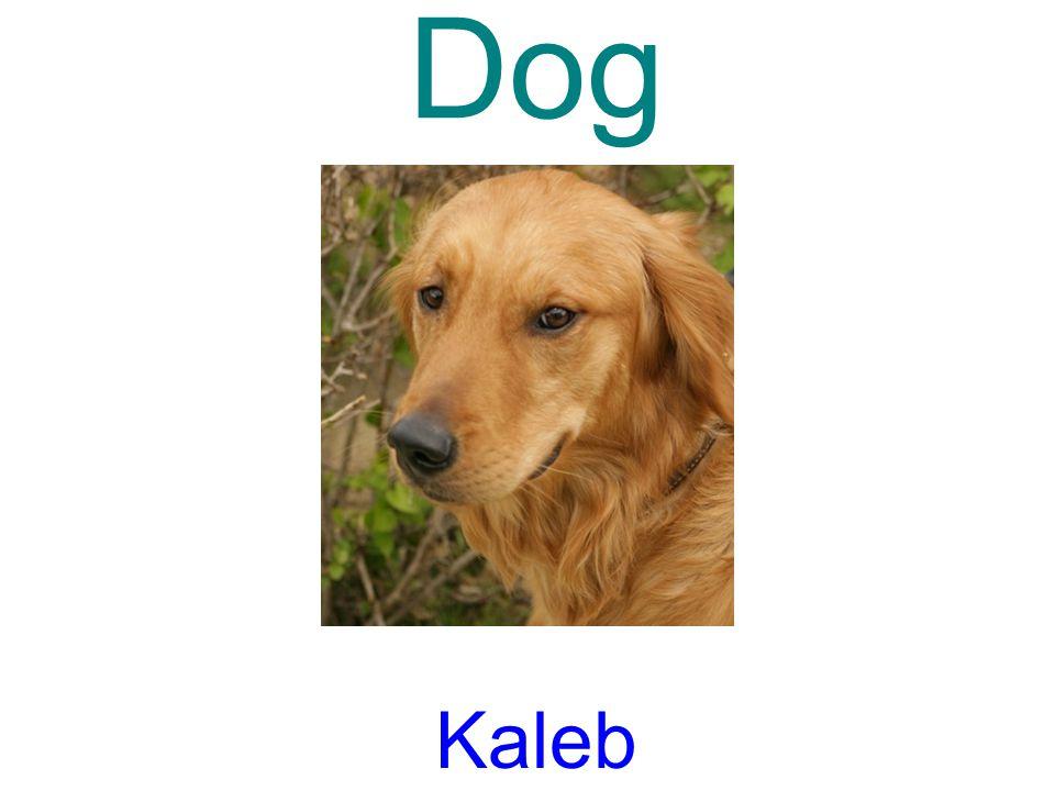 Dog Kaleb