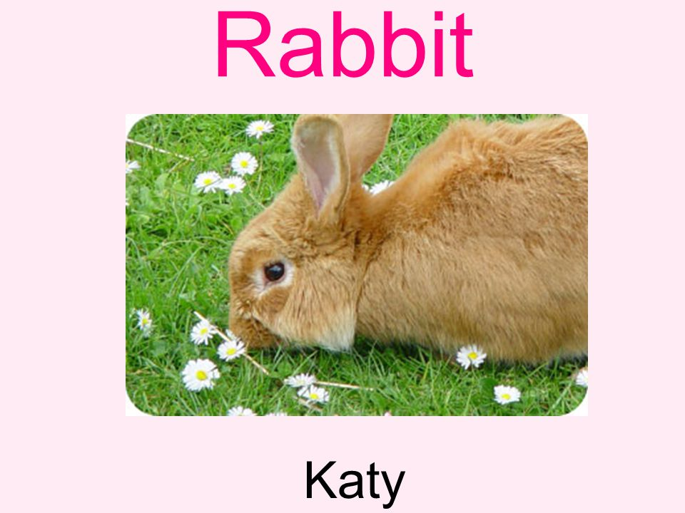 Rabbit Katy