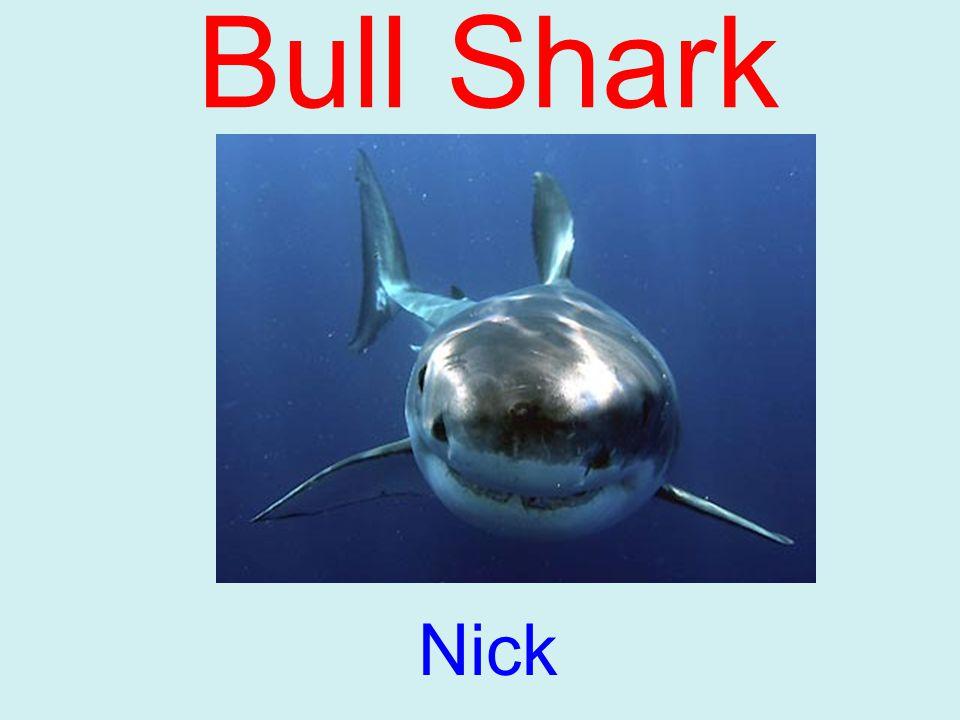 Bull Shark Nick