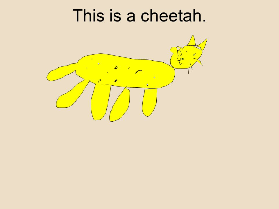This is a cheetah.