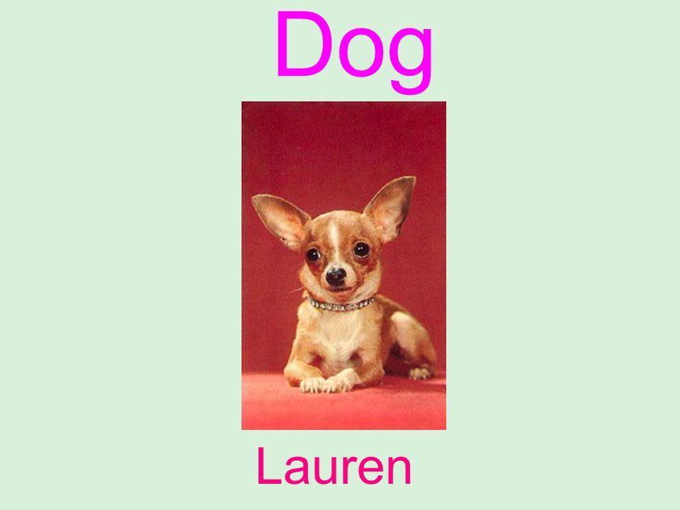 Dog Lauren