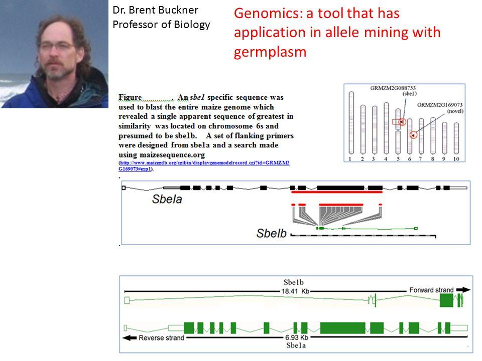 Dr. Brent Buckner Professor of Biology Genomics: a tool that has application in allele mining with germplasm