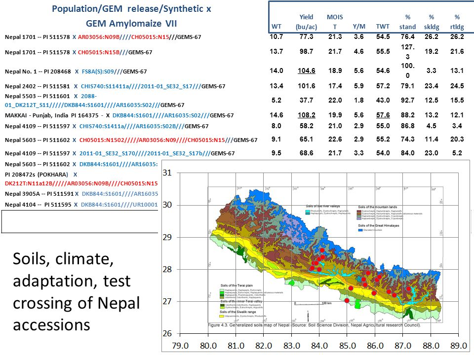 Population/GEM release/Synthetic x GEM Amylomaize VII WT Yield (bu/ac) MOIS TY/MTWT % stand % skldg % rtldg Nepal 1701 -- PI 511578 X AR03056:N09B////CH05015:N15///GEMS-67 10.777.321.33.654.576.426.2 Nepal 1701 -- PI 511578 X CH05015:N15B///GEMS-67 13.798.721.74.655.5 127.