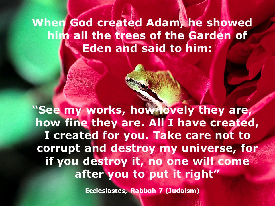 When God created Adam, he showed him all the trees of the Garden of Eden and said to him: See my works, how lovely they are, how fine they are.