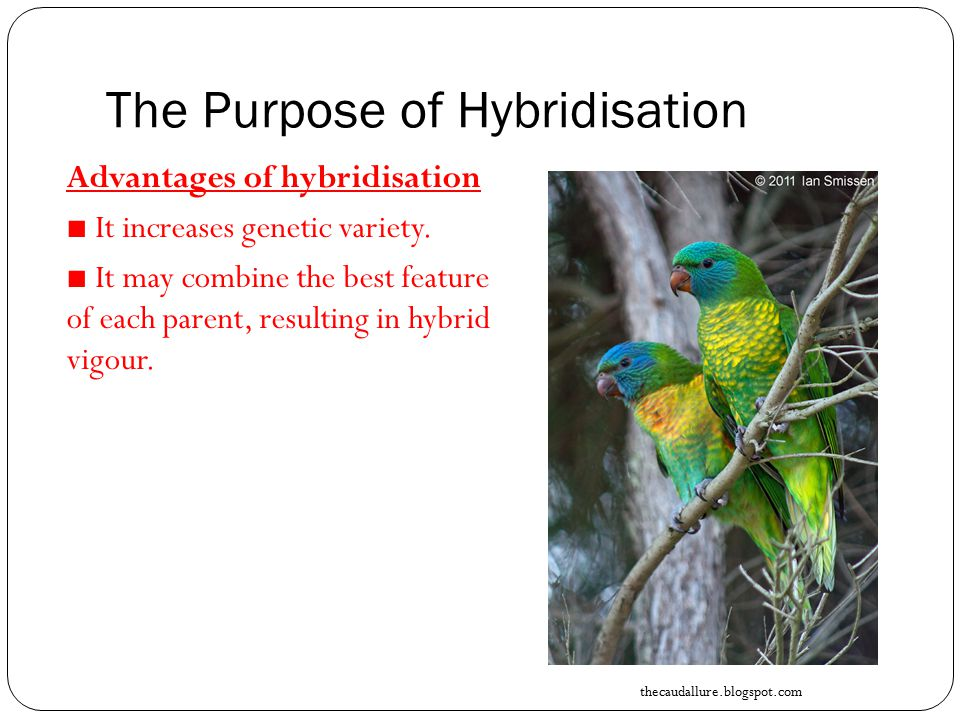 The Purpose of Hybridisation Advantages of hybridisation ■ It increases genetic variety.