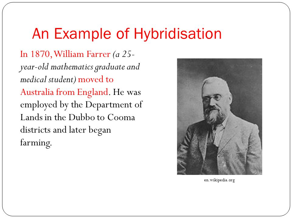 An Example of Hybridisation In 1870, William Farrer (a 25- year-old mathematics graduate and medical student) moved to Australia from England.