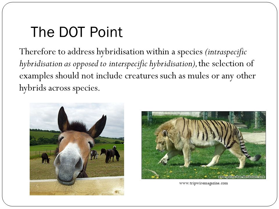 The DOT Point Therefore to address hybridisation within a species (intraspecific hybridisation as opposed to interspecific hybridisation), the selection of examples should not include creatures such as mules or any other hybrids across species.