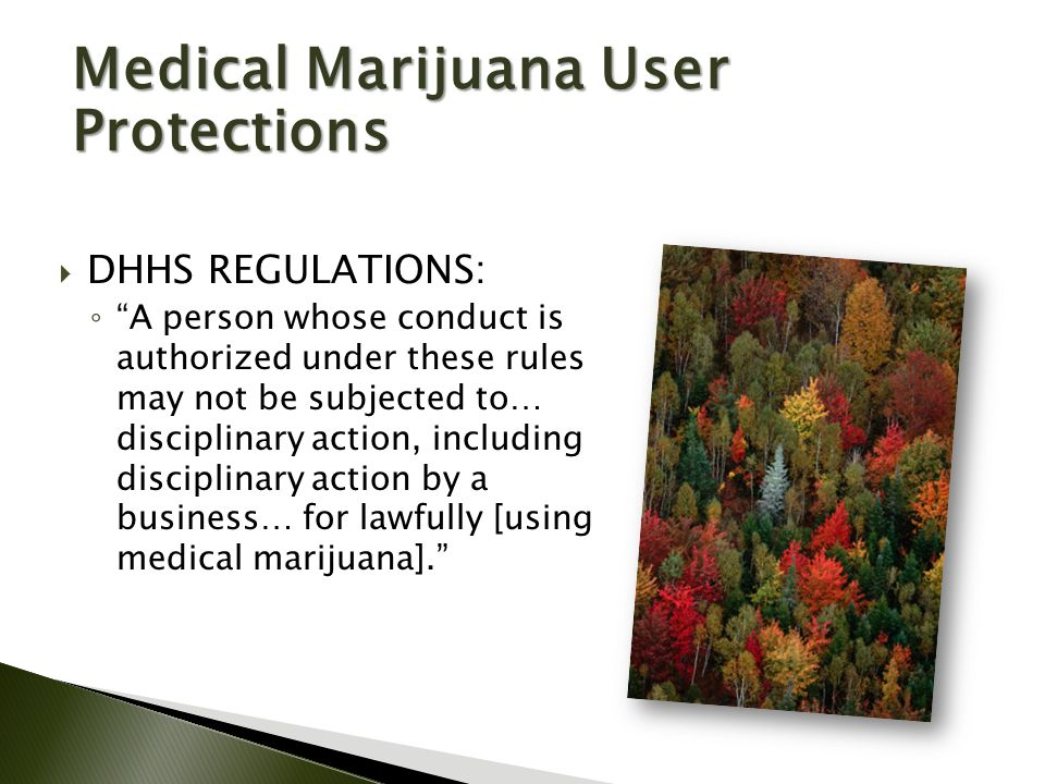  DHHS REGULATIONS: ◦ A person whose conduct is authorized under these rules may not be subjected to… disciplinary action, including disciplinary action by a business… for lawfully [using medical marijuana]. Medical Marijuana User Protections