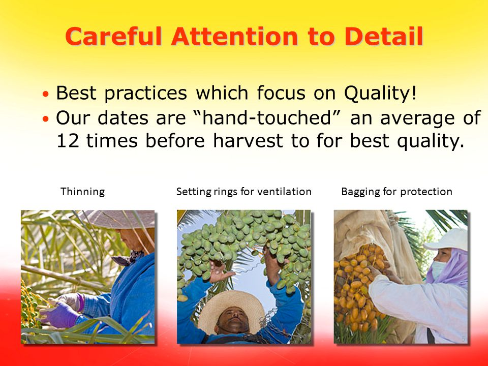"5 Careful Attention to Detail Best practices which focus on Quality! Our dates are ""hand-touched"" an average of 12 times before harvest to for best qu"