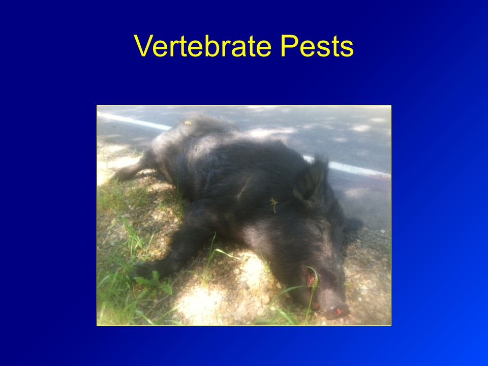 Vertebrate Pests