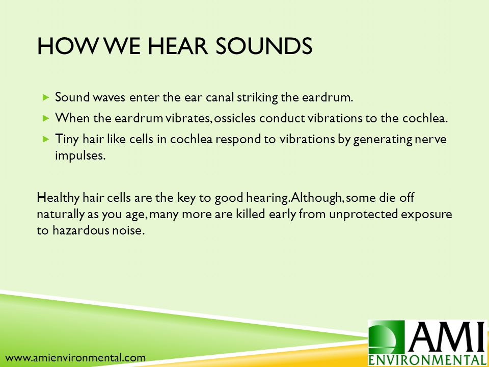 HOW WE HEAR SOUNDS  Sound waves enter the ear canal striking the eardrum.