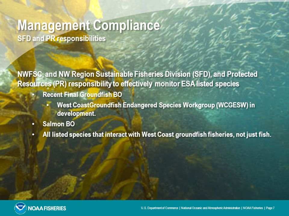 Management Compliance SFD and PR responsibilities NWFSC, and NW Region Sustainable Fisheries Division (SFD), and Protected Resources (PR) responsibility to effectively monitor ESA listed species Recent Final Groundfish BO West CoastGroundfish Endangered Species Workgroup (WCGESW) in development.