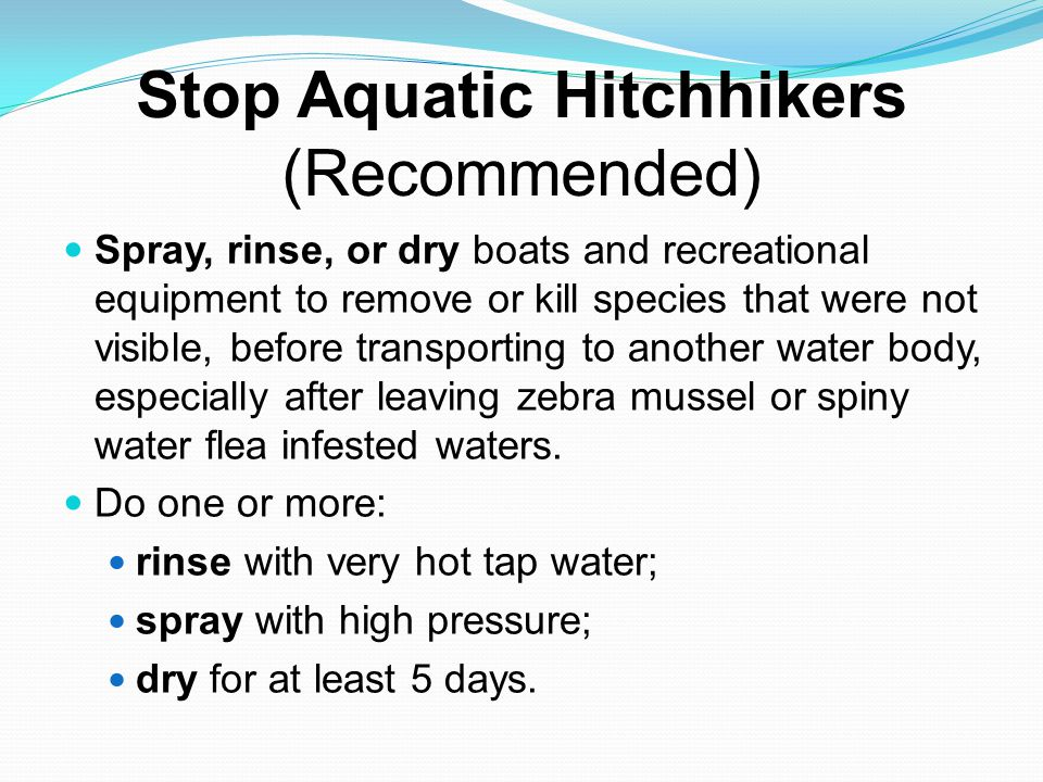 Stop Aquatic Hitchhikers (Recommended) Spray, rinse, or dry boats and recreational equipment to remove or kill species that were not visible, before transporting to another water body, especially after leaving zebra mussel or spiny water flea infested waters.