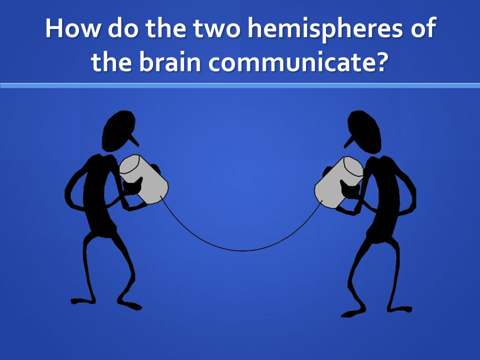 How do the two hemispheres of the brain communicate?