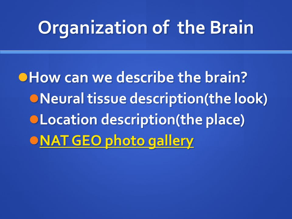 Organization of the Brain How can we describe the brain? How can we describe the brain? Neural tissue description(the look) Neural tissue description(