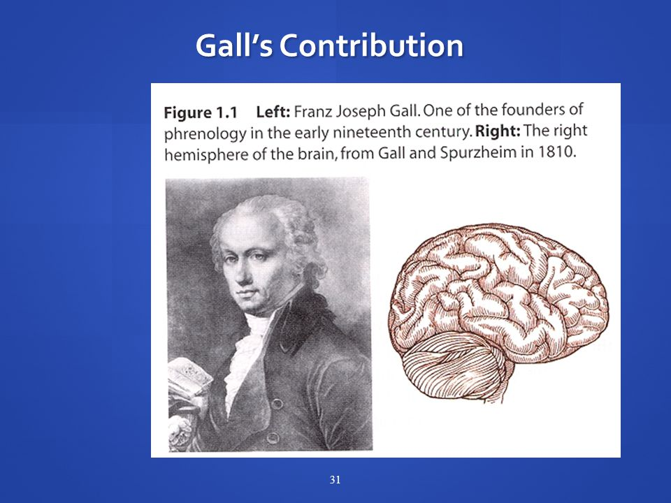 31 Gall's Contribution