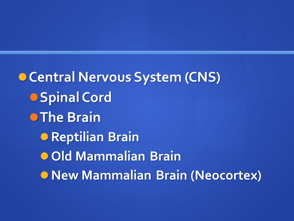 Central Nervous System (CNS) Central Nervous System (CNS) Spinal Cord Spinal Cord The Brain The Brain Reptilian Brain Reptilian Brain Old Mammalian Brain Old Mammalian Brain New Mammalian Brain (Neocortex) New Mammalian Brain (Neocortex)