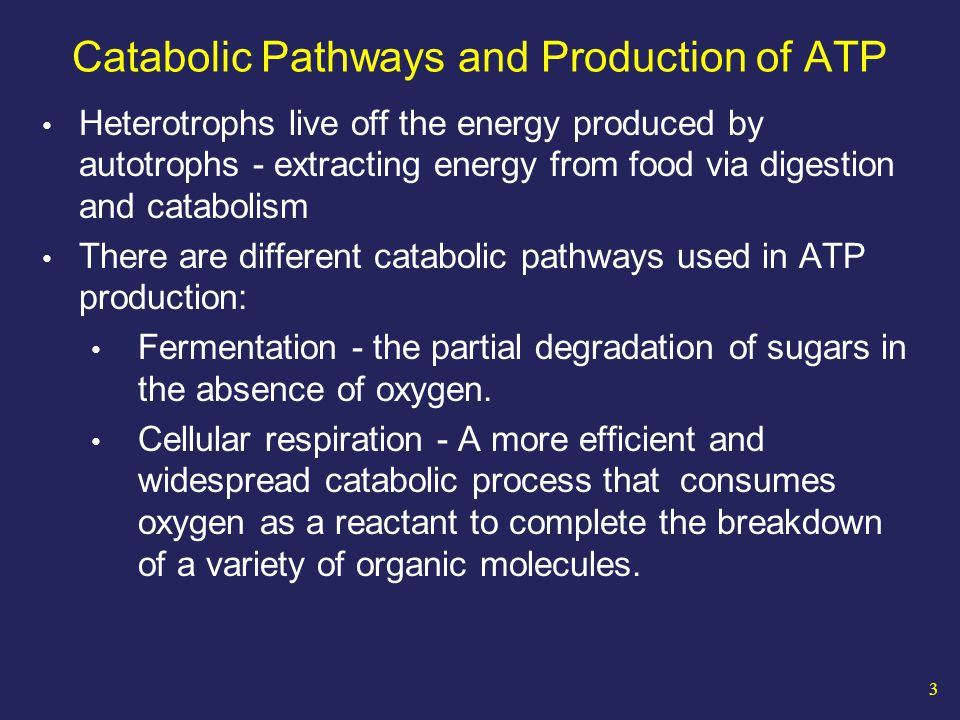 44 Lactic Acid Fermentation Used by most animal cells when O2 is not available NADH donates 2 e- and a H+ directly to the pyruvate (3C) produced during glycolysis, producing lactate (3C) and NAD+ CO O–O– 2 Lactate CHOH Glucose 2 Pyruvate GLYCOLYSISGLYCOLYSIS 2 ATP 2 ADP CO O - CO 2 NAD+ 2 NADH CH 3 CO 2 + 2 H + 2 NADH2 NAD + 2 ATP 2 ADP + 2 P i 2 Pyruvate 2 2 Lactate Lactic acid fermentation Glucose Glycolysis