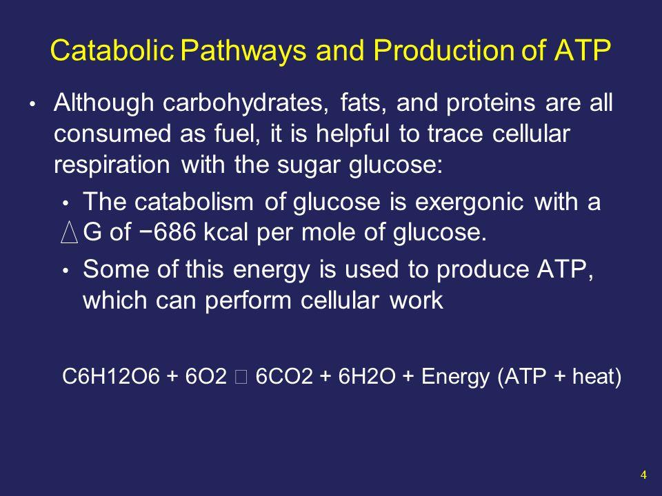 35 Summary of Glucose Catabolism