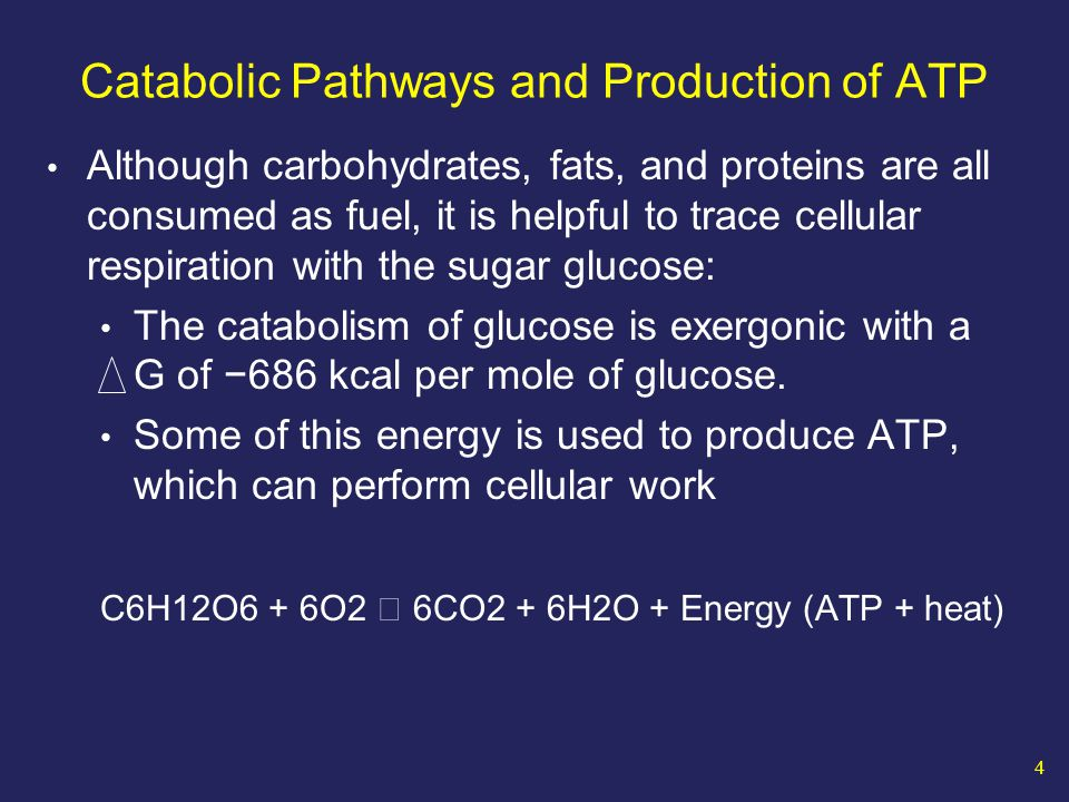 55 Product H H H H NAD + NAD H Energy-rich molecule 1.
