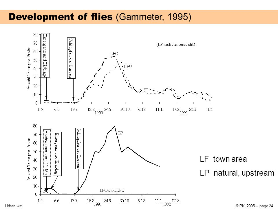 Urban water systems9 Introduction to wastewater disposal© PK, 2005 – page 24 Development of flies (Gammeter, 1995) LF town area LP natural, upstream
