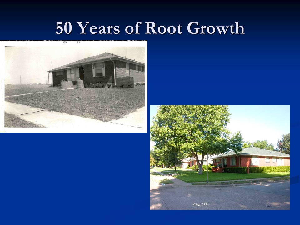 50 Years of Root Growth Aug 2006
