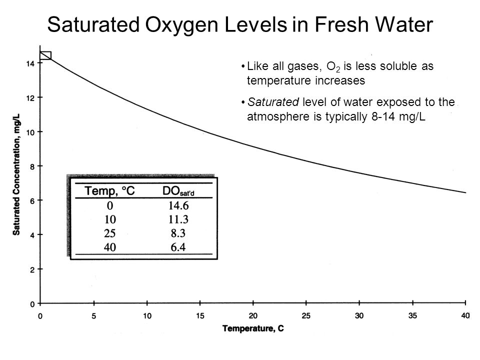 Saturated Oxygen Levels in Fresh Water Like all gases, O 2 is less soluble as temperature increases Saturated level of water exposed to the atmosphere