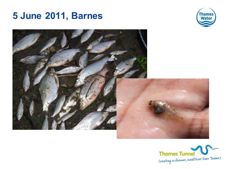 5 June 2011, Barnes