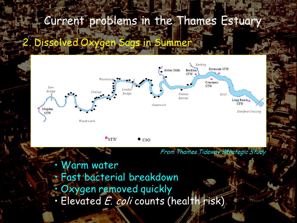 2. Dissolved Oxygen Sags in Summer Current problems in the Thames Estuary Warm water Fast bacterial breakdown Oxygen removed quickly Elevated E. coli