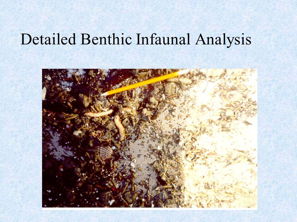 Detailed Benthic Infaunal Analysis