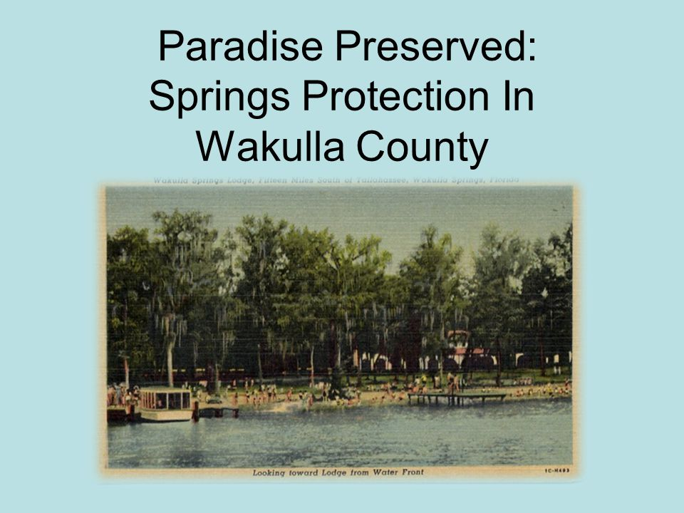 SPRINGS OF THE COUNTY Wakulla is filled with many freshwater springs and groundwater fed ponds and sinkholes Wakulla Springs – one of the largest and deepest in the world Spring Creek – largest average discharge of spring water in the state Panacea Mineral Springs