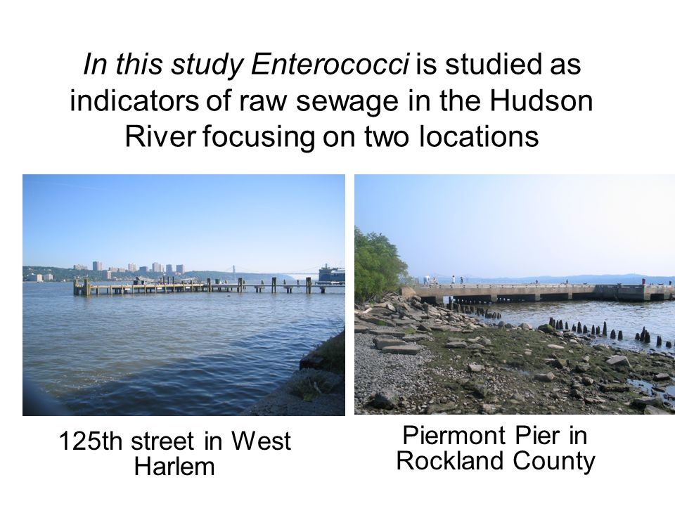 In this study Enterococci is studied as indicators of raw sewage in the Hudson River focusing on two locations Piermont Pier in Rockland County 125th