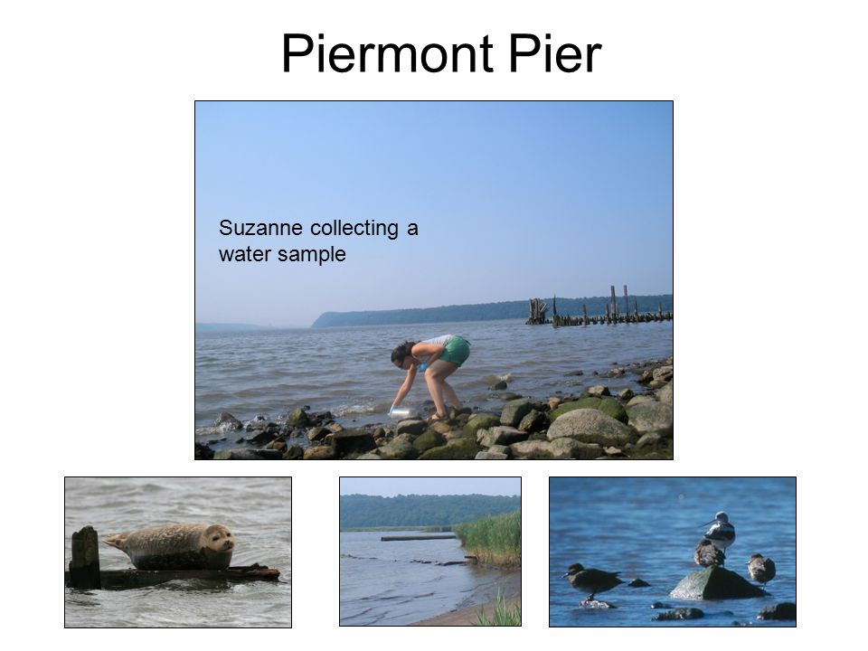 Piermont Pier Suzanne collecting a water sample