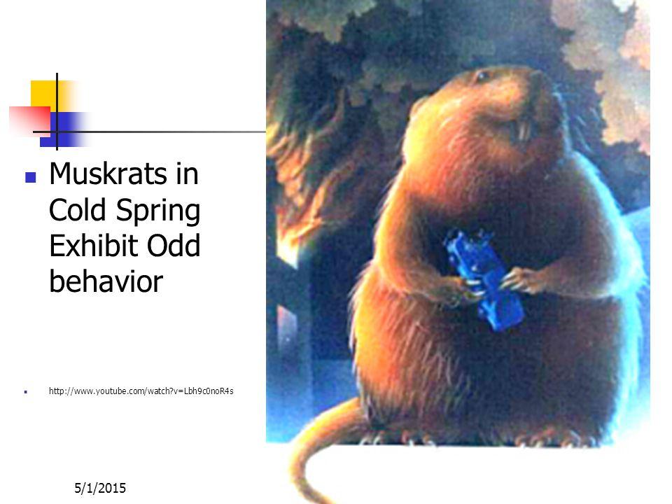 5/1/2015 Cd Accumulation in Muskrats